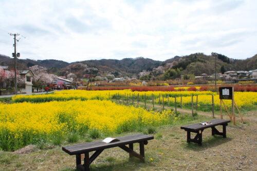 福島県福島市 花見山公園の情報 2021年4月6日 IMG_8655