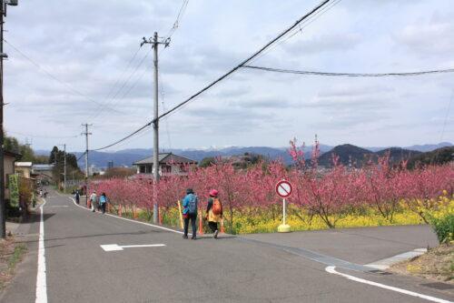 福島県福島市 花見山公園の情報 2021年4月6日 IMG_8668