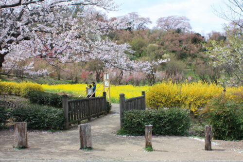 福島県福島市 花見山公園の情報 2021年4月6日 IMG_8669