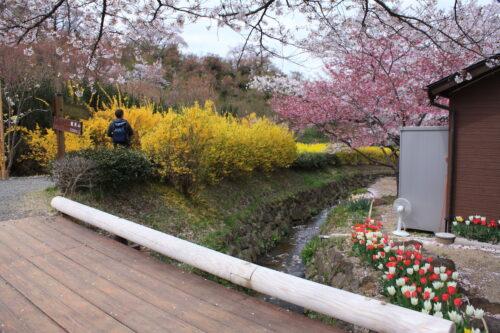 福島県福島市 花見山公園の情報 2021年4月6日IMG_8672