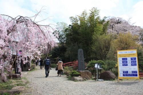 福島県福島市 花見山公園の情報 2021年4月6日 IMG_8676
