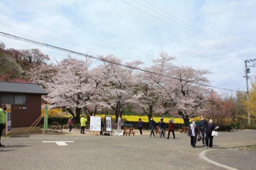福島県福島市 花見山公園の情報 2021年4月6日 IMG_8677
