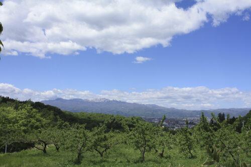 福島県福島市 花見山公園の情報 2021年5月10日 吾妻山をバックにした新緑の花見山