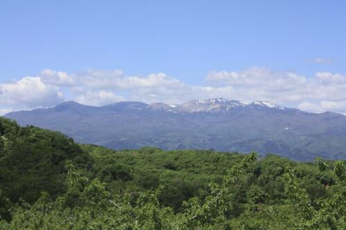 福島県福島市 花見山公園の情報 2021年5月10日 消えた雪うさぎ