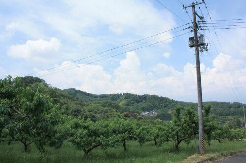 福島県福島市 花見山公園の情報 2021年6月15日 花見山と桃畑