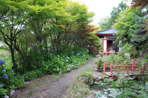 福島県福島市 花見山公園の情報 2021年8月10日 IMG_8759