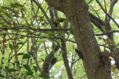 福島県福島市 花見山公園の情報 2021年8月10日 IMG_8762