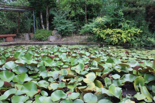 福島県福島市 花見山公園の情報 2021年8月10日 IMG_8770