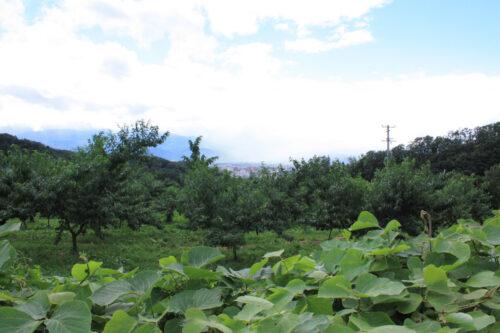 福島県福島市 花見山公園の情報 2021年8月10日 IMG_8798