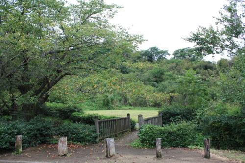 福島県福島市 花見山公園の情報 2021年9月3日 IMG-20210903h2s