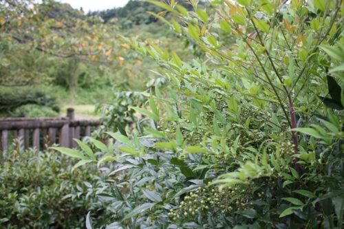 福島県福島市 花見山公園の情報 2021年9月3日 IMG-20210903h3s